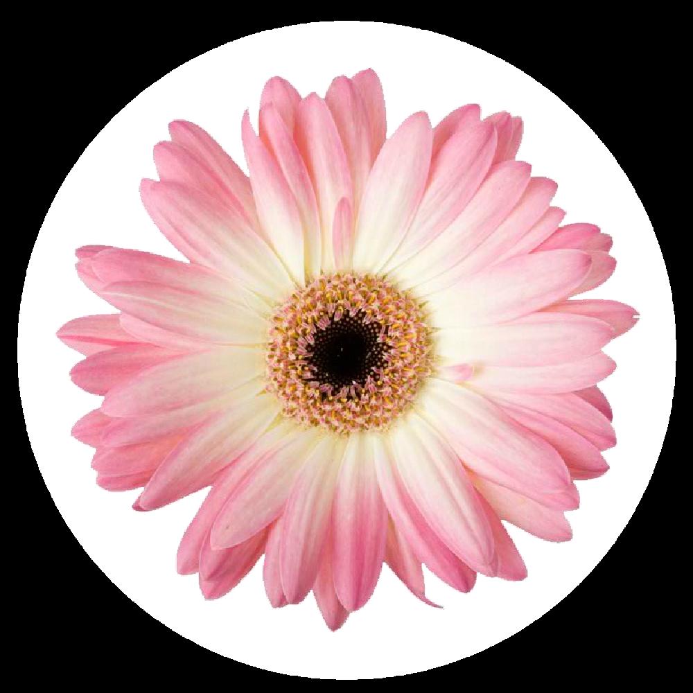 testimonial flower